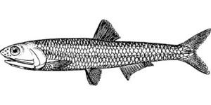 b12-source-poisson-300x150