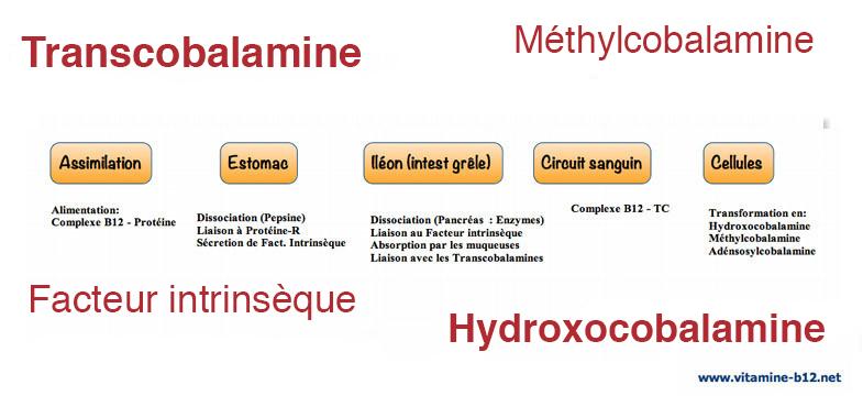 Malabsorption de la vitamine B12