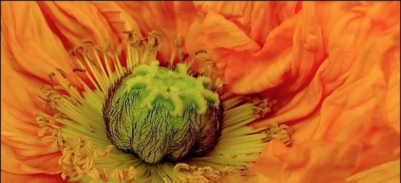 Vitamine B12, Végétaliens et Végétariens