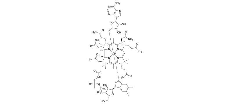Adénosylcobalamine, Vitamine B12 bio-active